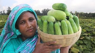 Farm Fresh Cucumber Recipe Easy & Spicy Cooking Fresh Shosa With Pangasius Fish Curry Village Food