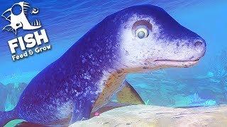 FEED AND GROW FISH = EU SOU UMA FOCA