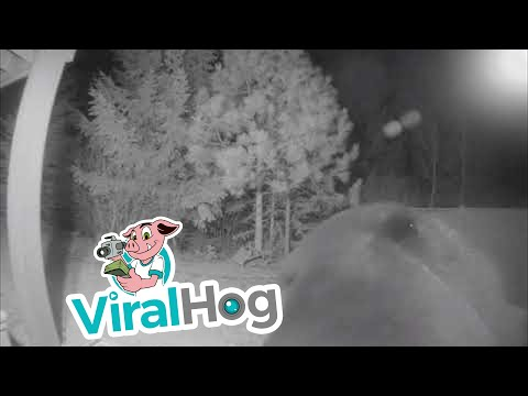 JT - Security Camera Meets Bear