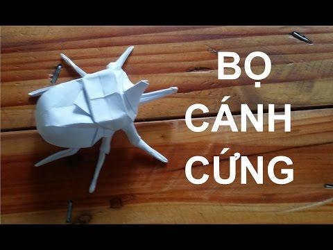 Origami: Gấp  Bọ Cánh Cứng