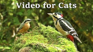 Videos for Cats to Watch with Their People - Birds of The UK