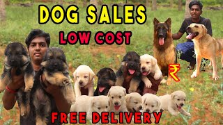 DOG FOR SALES | PUPPY SALES | ALL  BREEDS PRICE LIST | ft @Namma MKG | FREE DELIVERY KENNELS NEAR ME