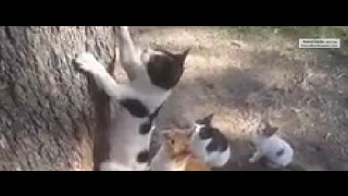 "Kitten ""saved"" by her mother,Mom cat saving her kitty!"