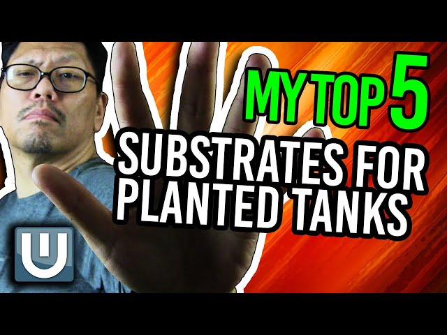 Top 5 Substrate for Planted Aquariums