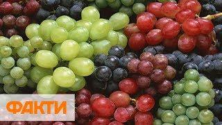 Украинский виноград: цена и чем полезен