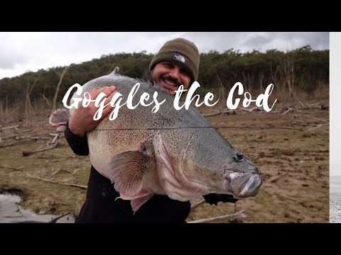 Goggles The Cod! Lake Eildon Monster Fish