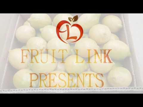 Fresh Lemons from Egypt by Fruit Link