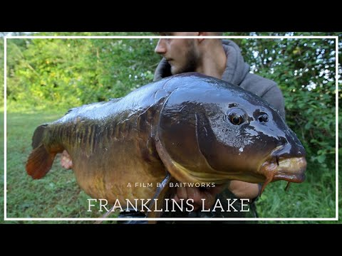 Carp Fishing - Fishery Focus - Franklins Lake