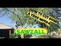 How to cut down a tree and stump with a reciprocating saw or sawzall