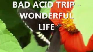 Watch Bad Acid Trip Wonderful Life video