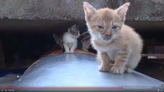 Свалка живых котят в Сочи