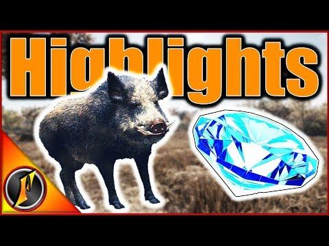 Diamond Wild Boar Stream Highlights!