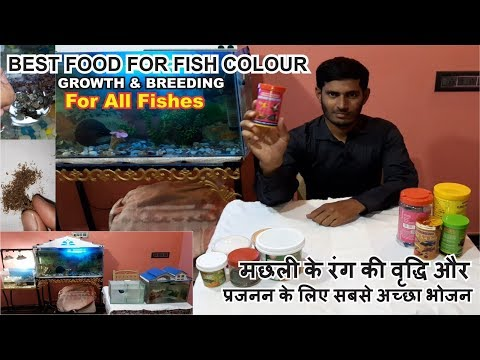 Best Food For Fish Colour - How To Color Enhancing Fish Food | Color Enhancer