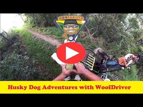 Adventures of Husky Dogs WDOT Blue Marsh Lake Part 7