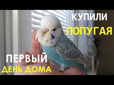 📚 Адаптация волнистого попугая. Купили попугая. Первый день дома