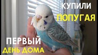 Адаптация волнистого попугая. Первый день дома