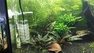 Aquarium 160L crevettes poissons équipement chihiros