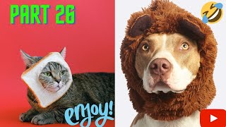 Funny Cats And Dogs FAILS COMEDY videos Compilation. Part 26