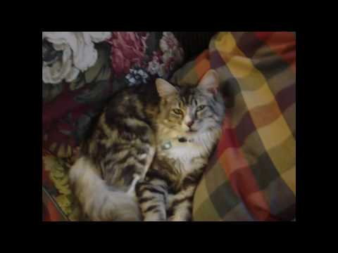 Video of my new cat!