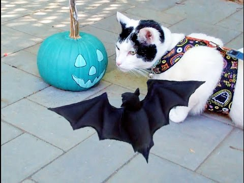 Halloween Spooky Pumpkins video| Cute Cat & Bat Funny Pet Trick or Treat Haunted music video