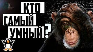 Самые умные животные в мире! Невероятно, но некоторые умнее человека!