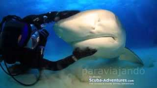 Amazing petting water animals