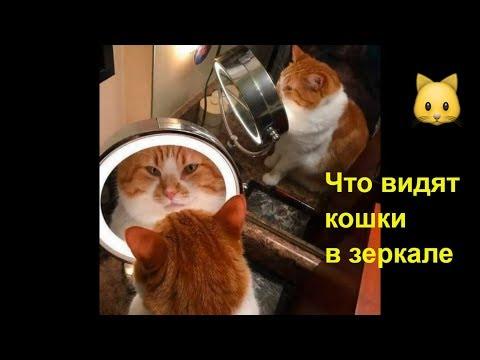 Кошки и Магия Зеркала. Это надо видеть! Смешное видео