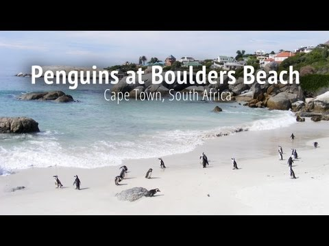 Penguins at Boulders Beach - Cape Town, South Africa