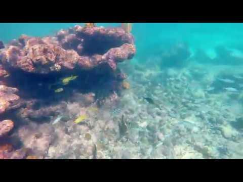 Smith Cove (Barcadere) - Grand Cayman