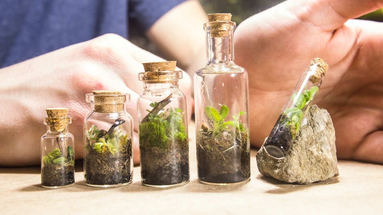 Making Tiny Native Terrariums Youtube