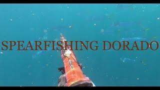 SPEARFISHING DORADO IN MARYLAND CANYONS SEPT 2019