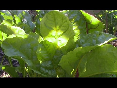 Growing Food In Partial Shade