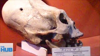 10 Extinct Human Species That Are Still A Mystery