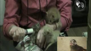 Котята спасёнышы - в очень любящие ручки!