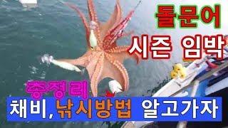 돌문어낚시,채비 낚시방법 총정리,시즌전에 철저히 준비
