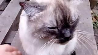 Готовимся к зиме Строим котельную Часть2 Привезли кота домой Переезд в Краснодар