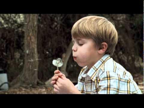 Like Dandelion Dust - Coming to DVD