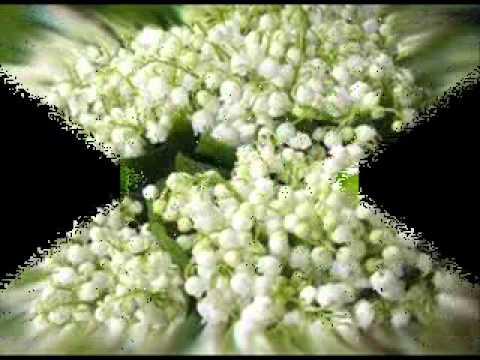 Ландыши-ландыши тюльпаны ландыши
