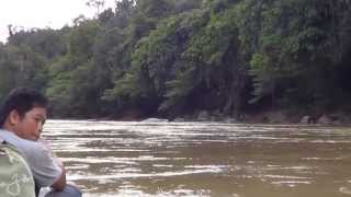 Borneo Wild Pig Hunt on Baram River - Part 1