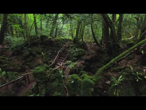 Puzzlewood - A Magical Woodland in the Forest of Dean