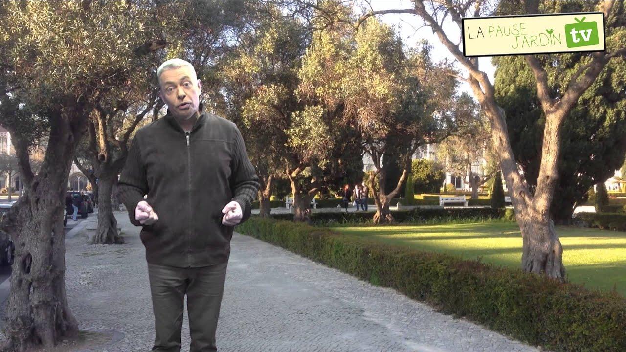 Les plantes d'ombre - YouTube