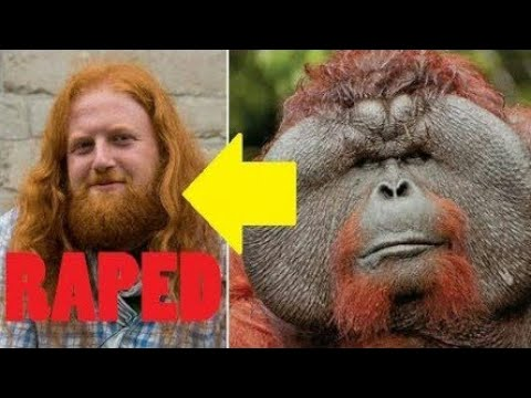 Tourist Attacked And R@ped By 400-Pound Orangutan Because Of His Orange Hair