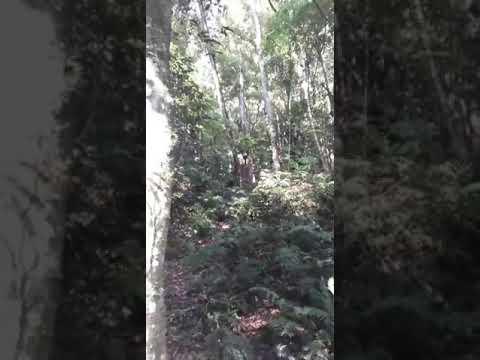 Adentrando a mata do pico da pedra(1)