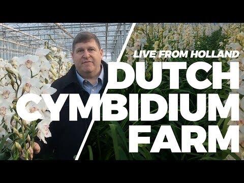 JFTV: Live from Holland - Dutch Cymbidium Farm with Mike