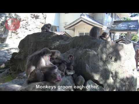 A famous monkey park in Japan