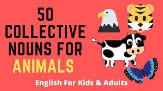 Collective Nouns Animals