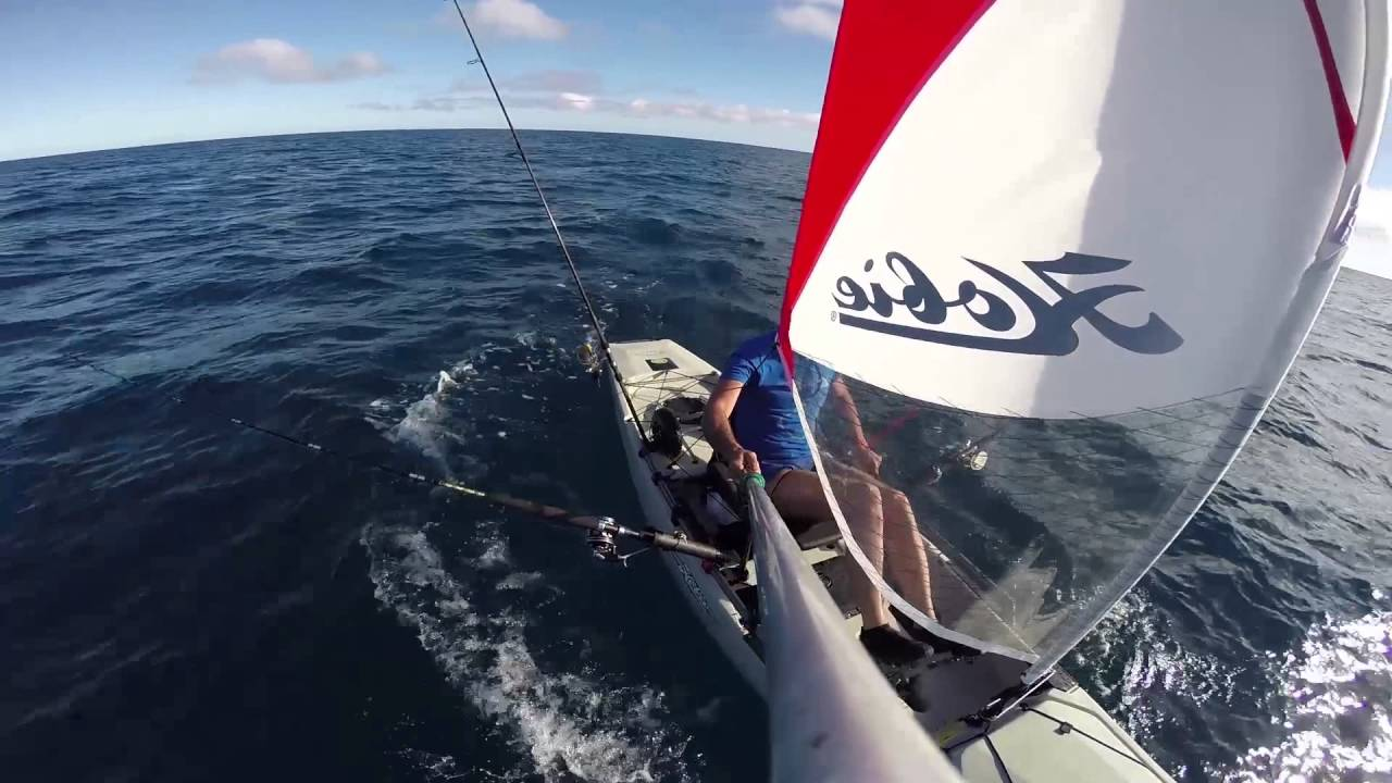 Cat Sail Video Youtube
