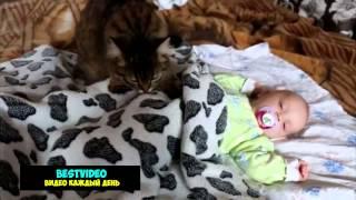 Кошка убаюкивает грудного ребенка.