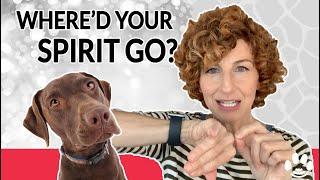 What happens when when your pet dies?   Animal Communicator Danielle MacKinnon