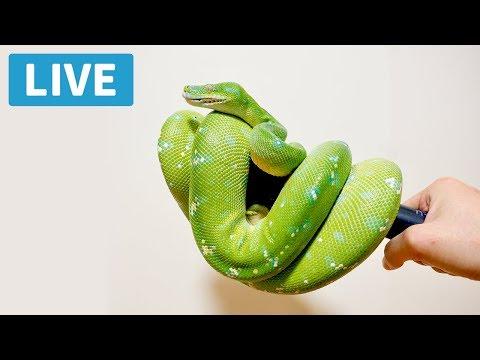 【LIVE】ヘビにえさやるよ